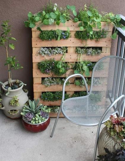 Jardineando sin jardin 2