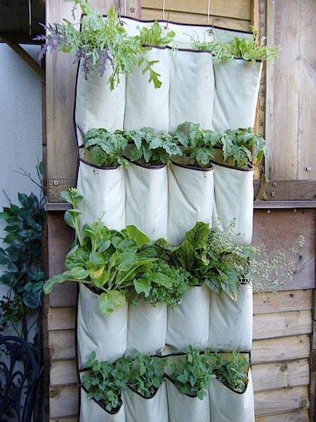 Jardineando sin jardin 4