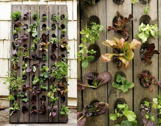 Jardineando sin jardin 5