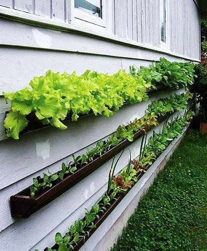 Jardineando sin jardin 6