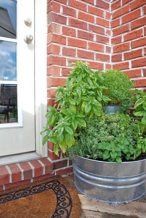 Jardineando sin jardin 7