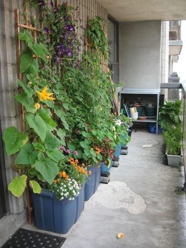 Jardineando sin jardin 9