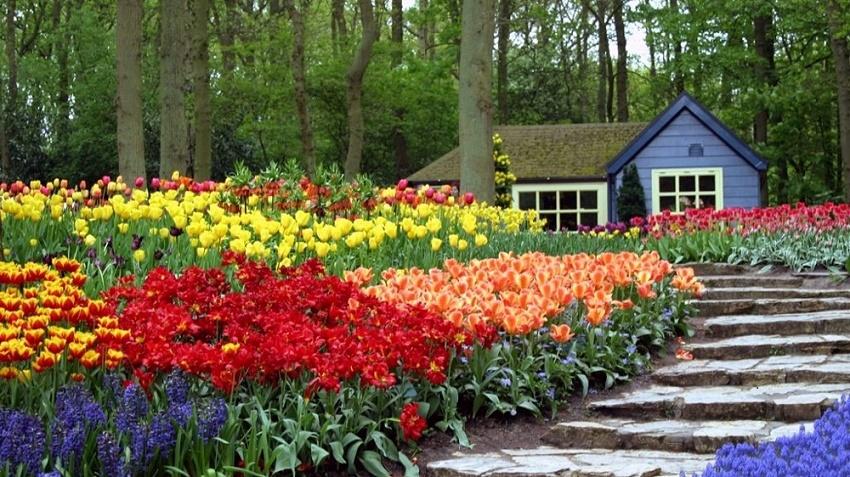 Armon a y dise o en el jard n los colores un jardin for Guijarros de colores para el jardin