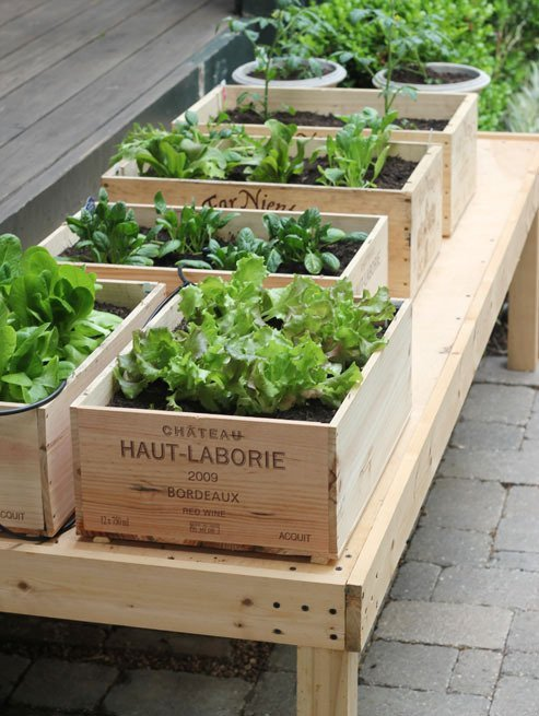 Jardineando sin jardin 1