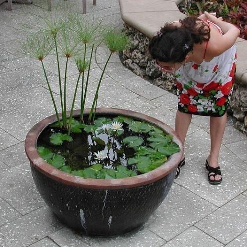 Jardineando sin jardin 8