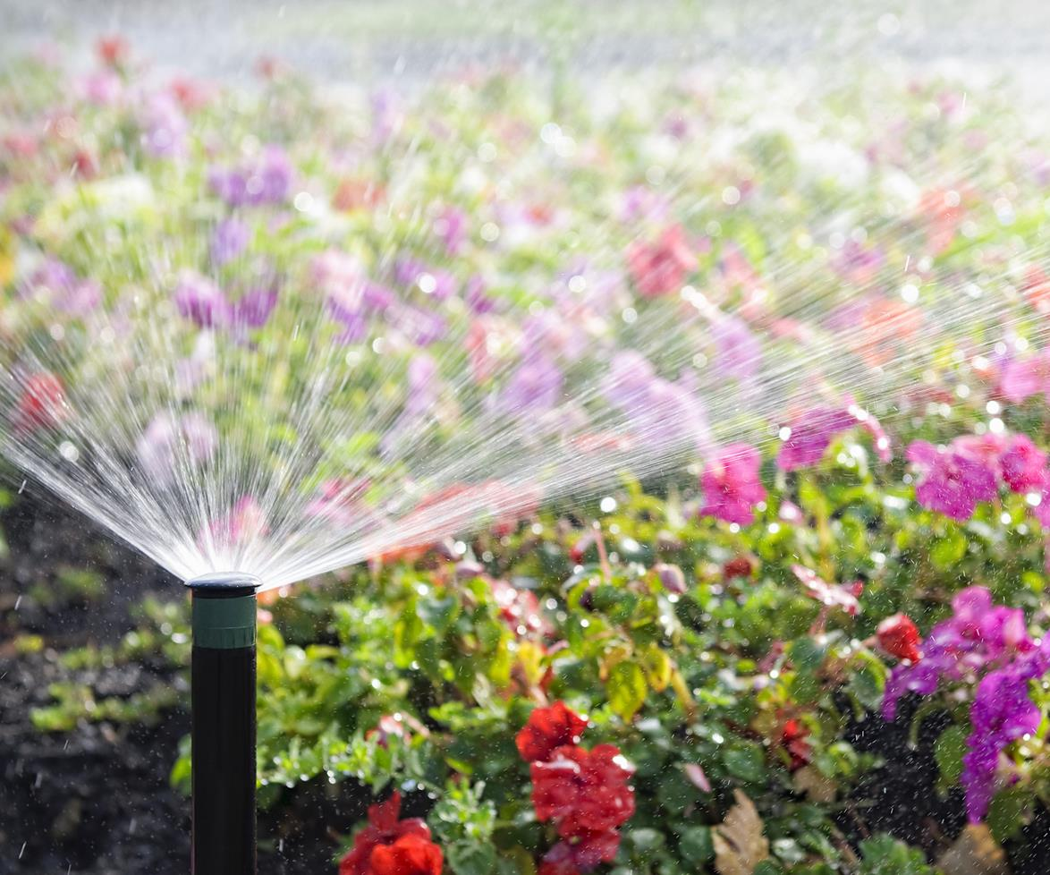 cuidar jardín en verano | UNJARDINPARAMI