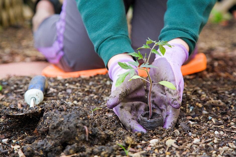 Trucos para cuidar tu jardín en verano