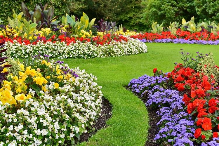 Las Plantas como elementos esenciales en el diseño de jardines