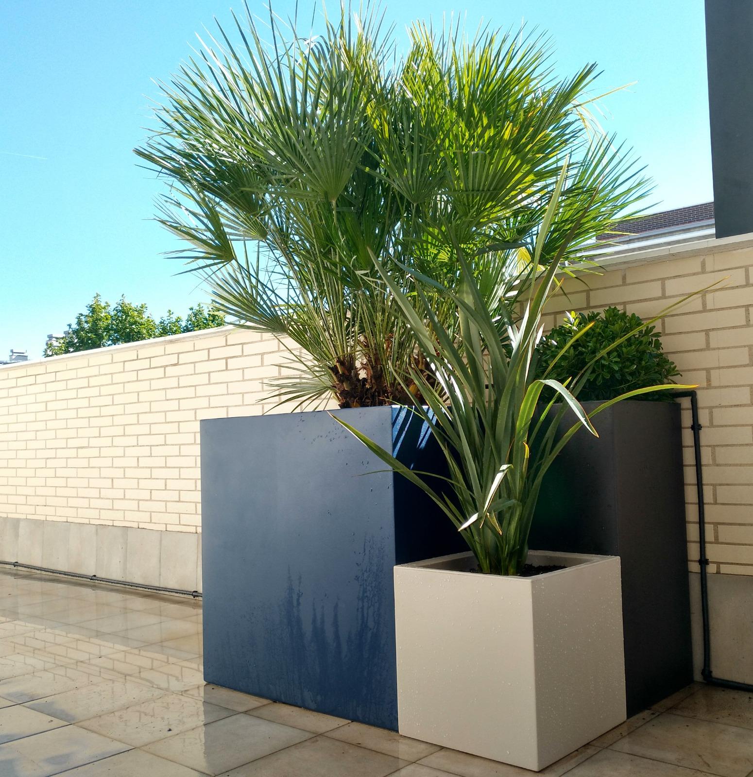 plantas aptas para macetas